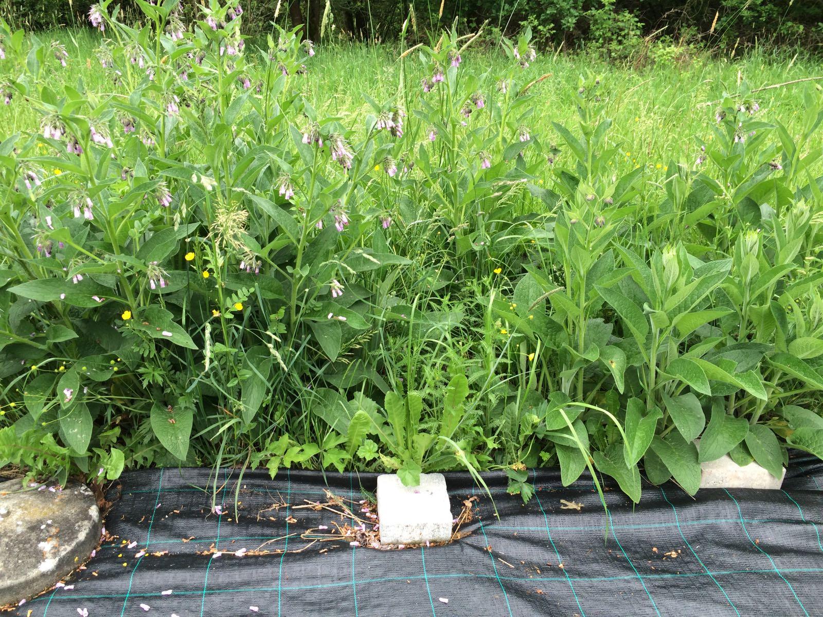 waldgarten anlegen permakultur