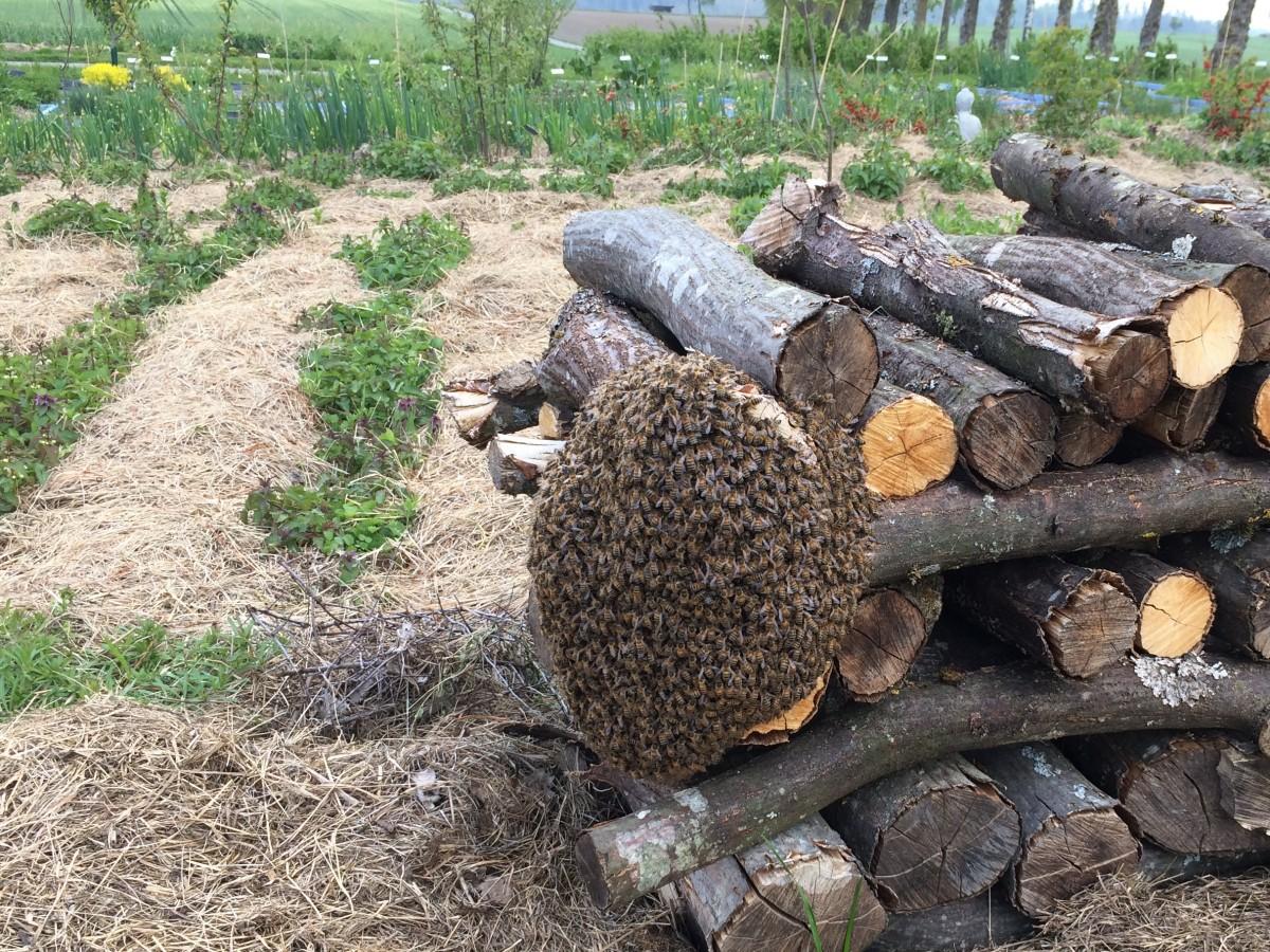 Die entflohenen Bienen (III)
