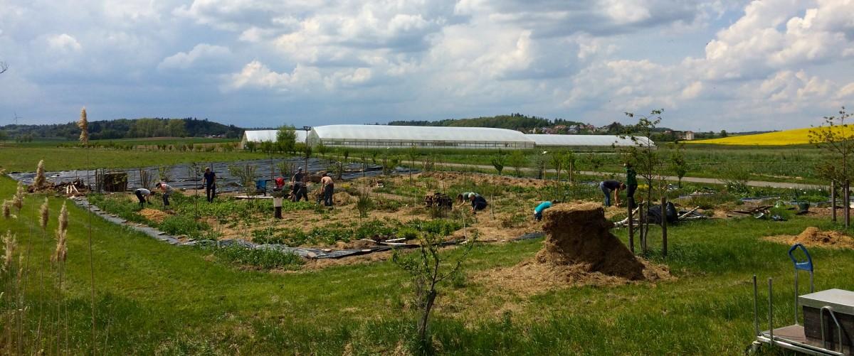 Mulchen, jäten, pflanzen, ernten – im Waldgarten
