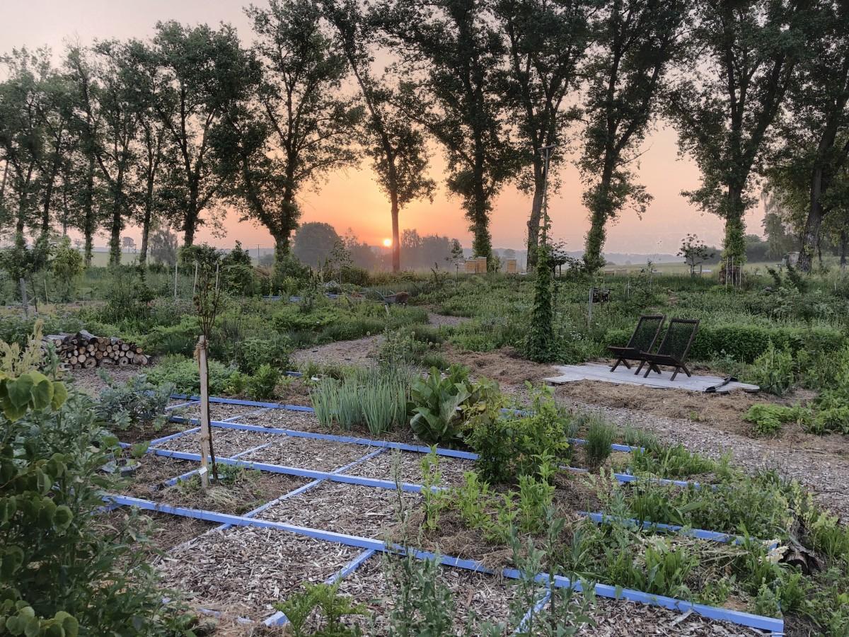 Sonnenaufgang im Waldgarten