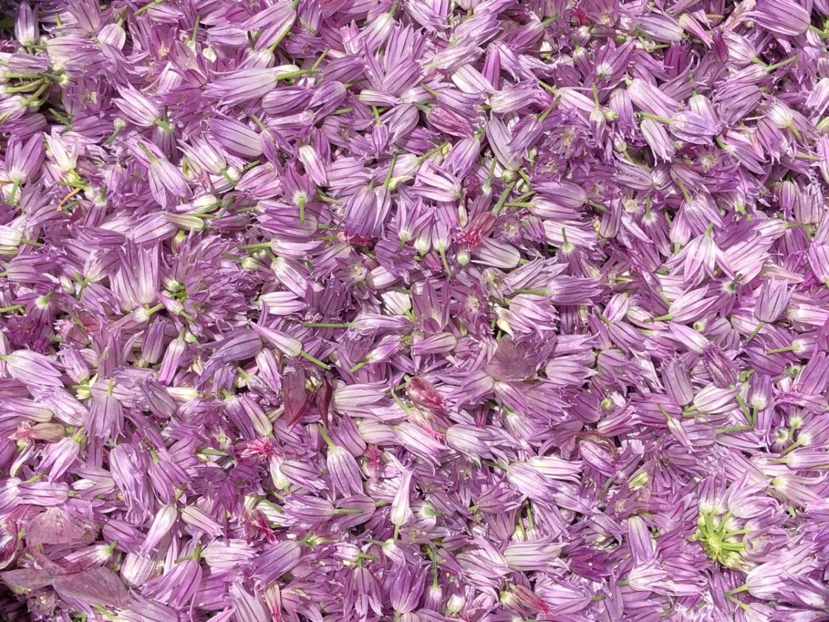 Schnittlauchblüten für die Schnittlauchblüten-Butter