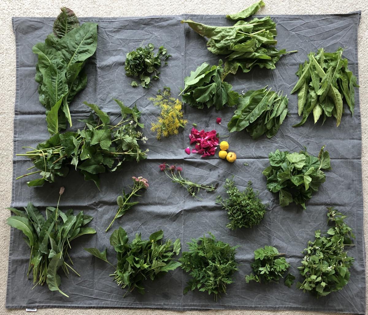 Kleine Sammlung an wildem Grün im Waldgartenkurs